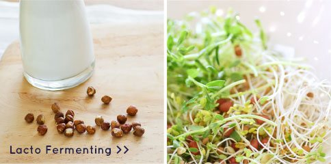 fermenting-sprouts